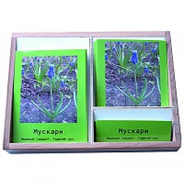 Комнатные растения (3-х частные карточки). 3.32