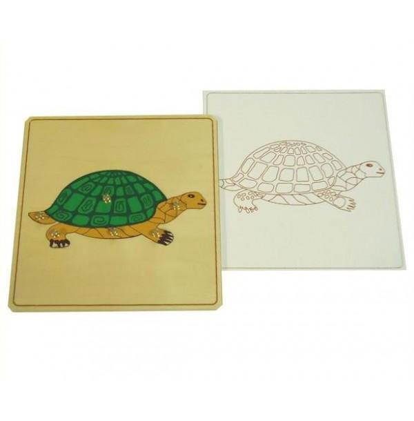 Строение черепахи с контуром. 5.03.6