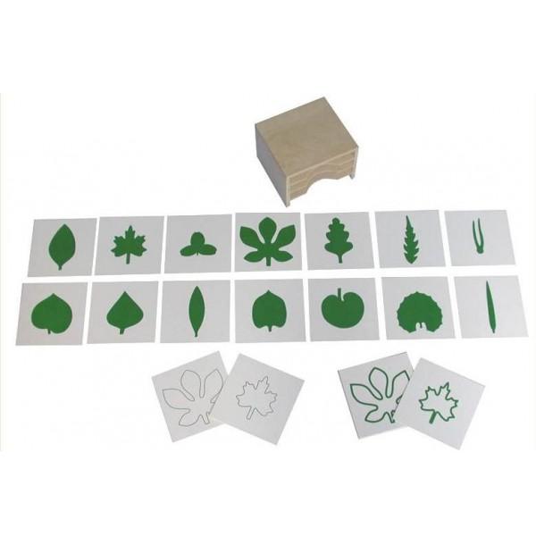 Шкафчик с карточками к ботаническому комоду. 5.01.2